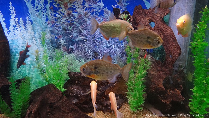 Обитатели владивостокского океанариума