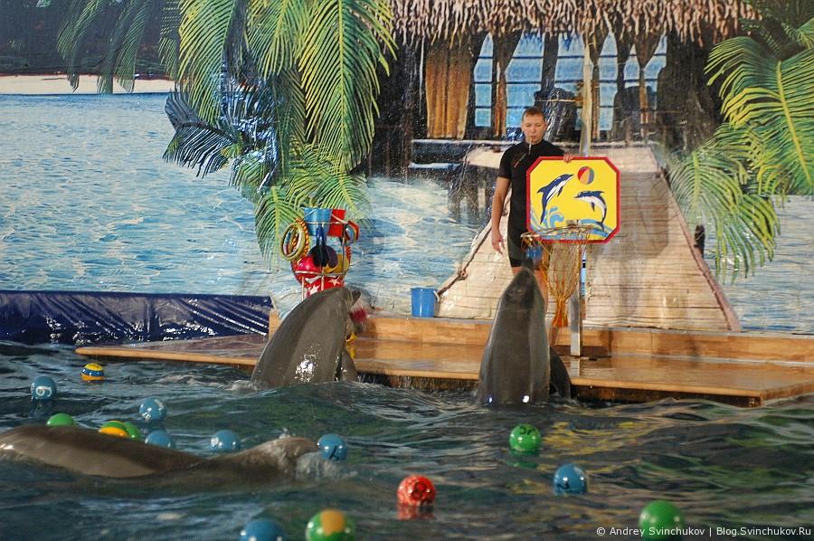 Дельфины в Хабаровске