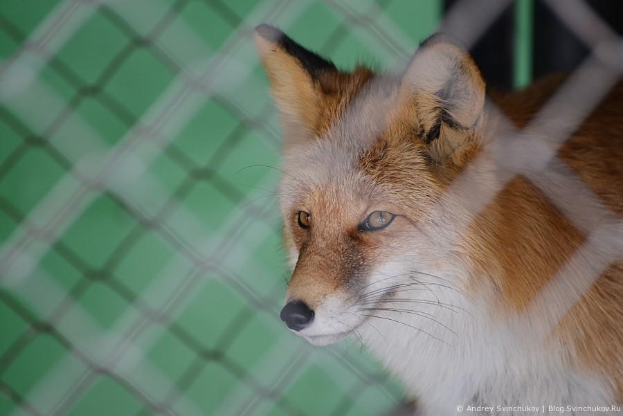 Портреты животных, обитающих в хабаровском зоосаде
