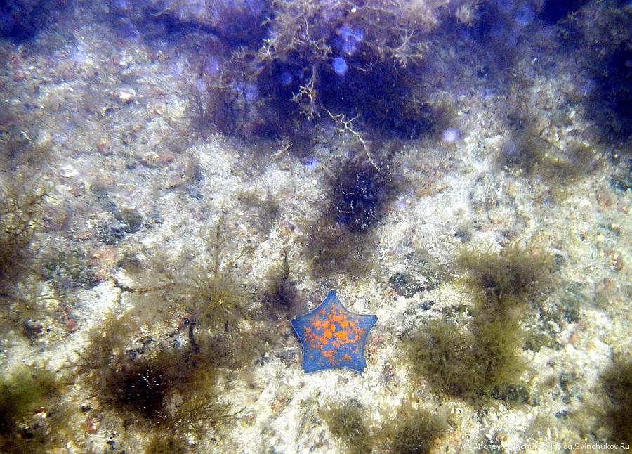 Первые мои подводные фотографии в Японском море