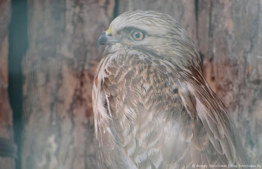 Птицы зоосада «Приамурский» им. В.П. Сысоева»