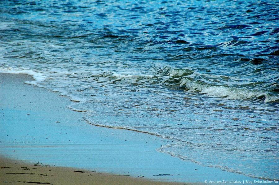 Море, нерпы, птицы и закат