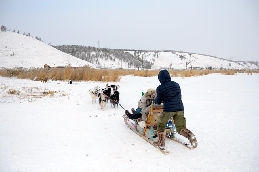 Катание на собачьих упряжках в Якутии