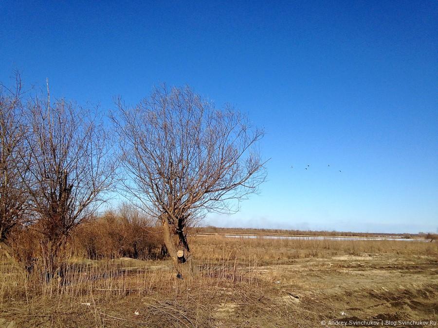 Остров Большой Уссурийский ранней весной