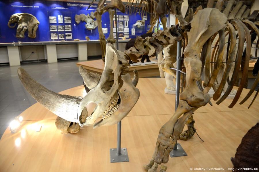 Музей мамонта в Якутске