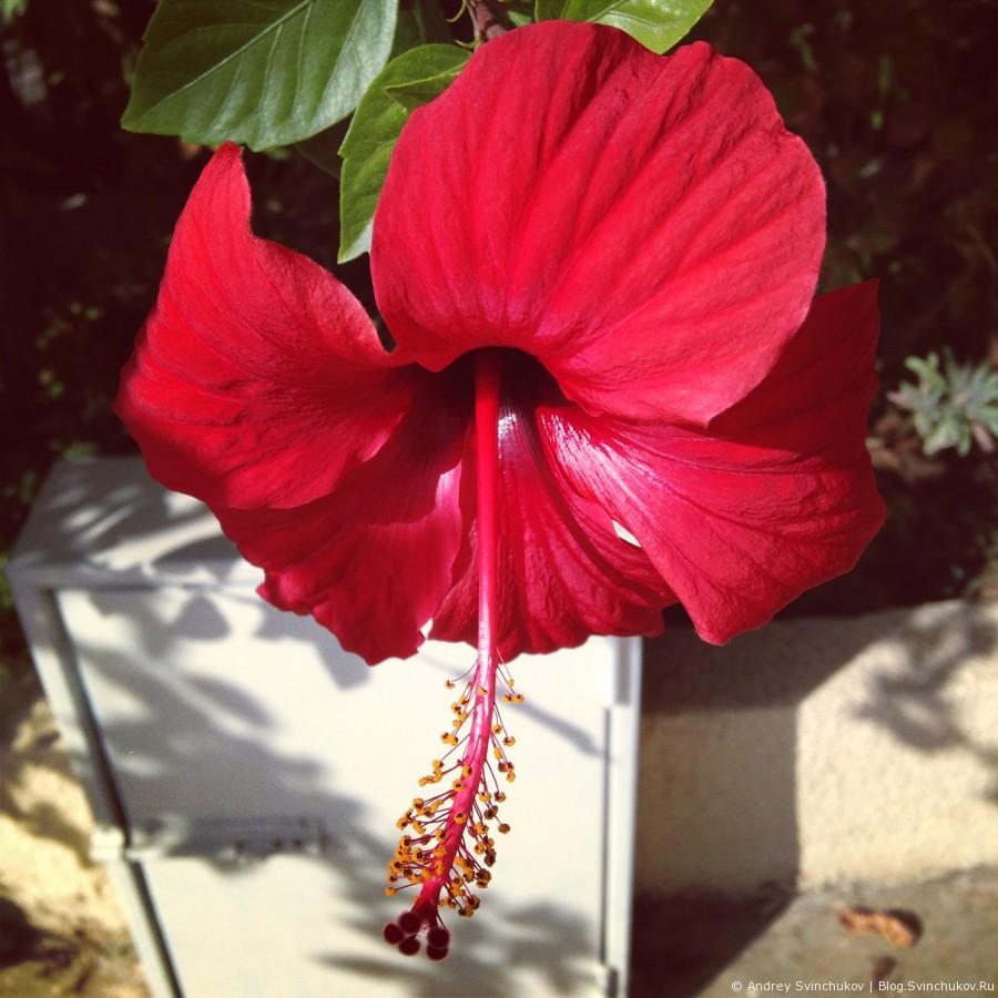 Инстаграмное 44. Цветы.
