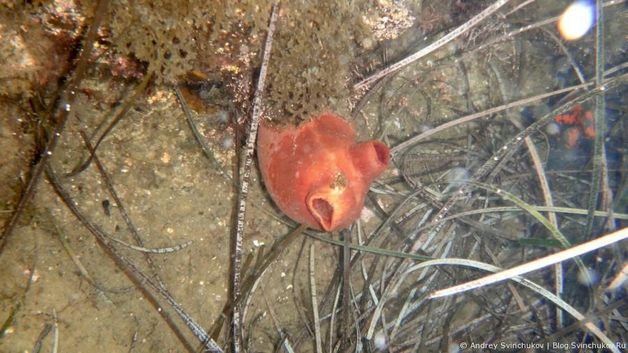 Под водой в Японском море