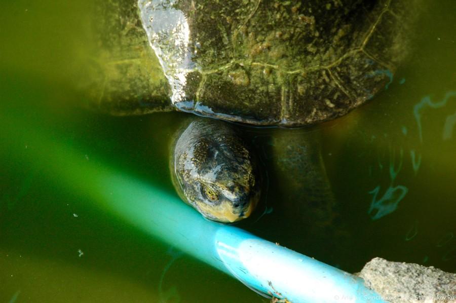 Тайский храм. Рыбы и черепахи