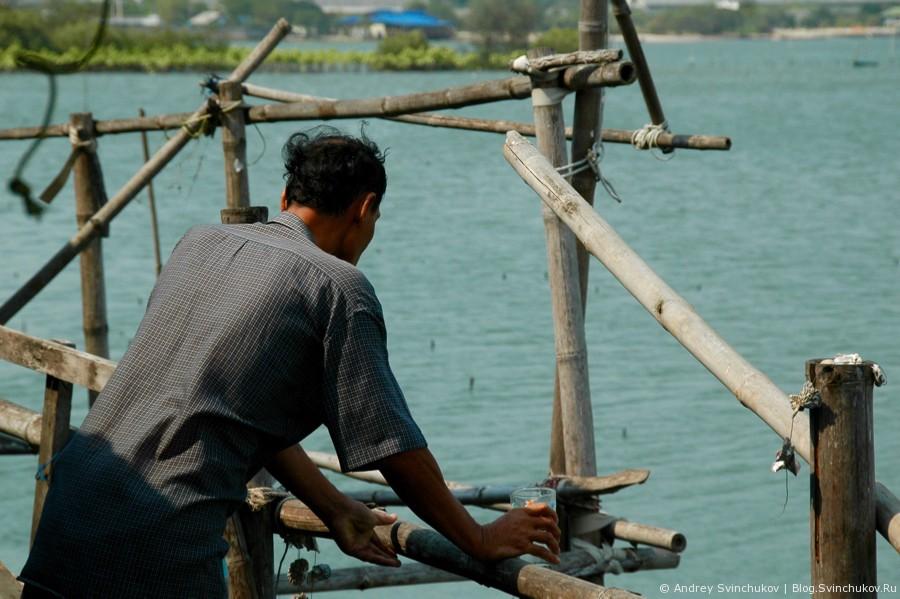 Дегустация устриц в Таиланде
