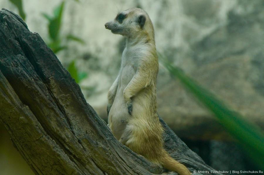 Зоопарк в Таиланде