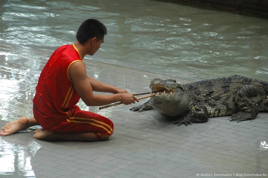 Шоу с крокодилами в Таиланде