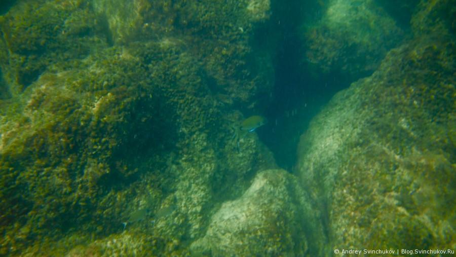 Неглубокое погружение в Средиземное море