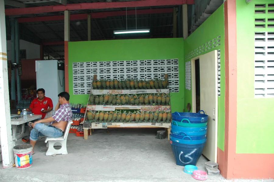 Посещение ананасовой фермы в Таиланде