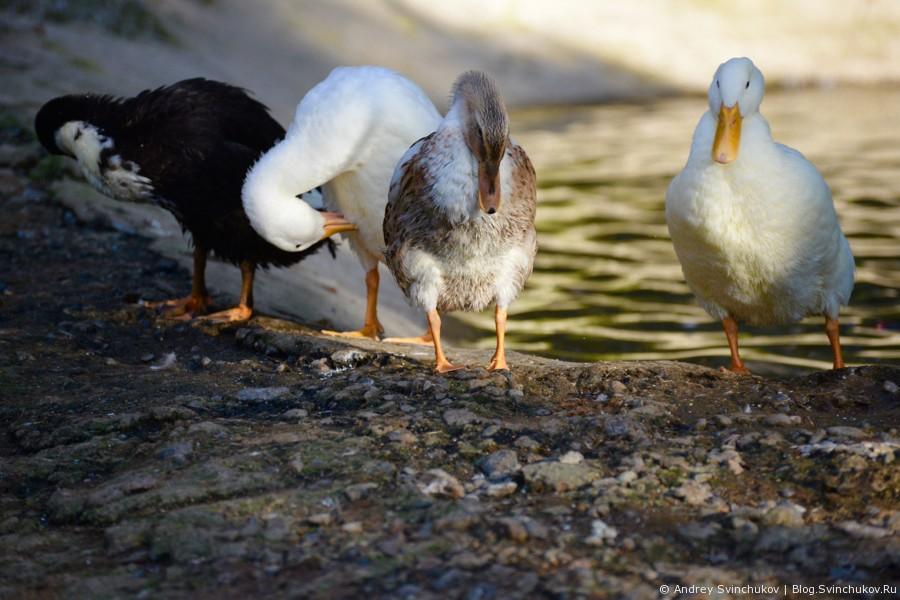 Птицы, обитающие в Приамурском зоосаде