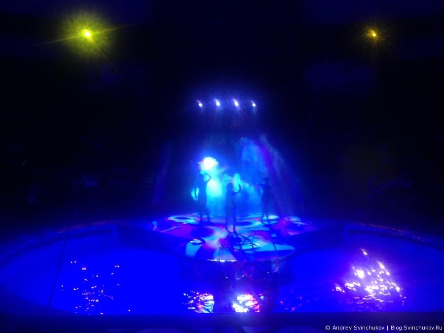 Цирк на воде в Хабаровске