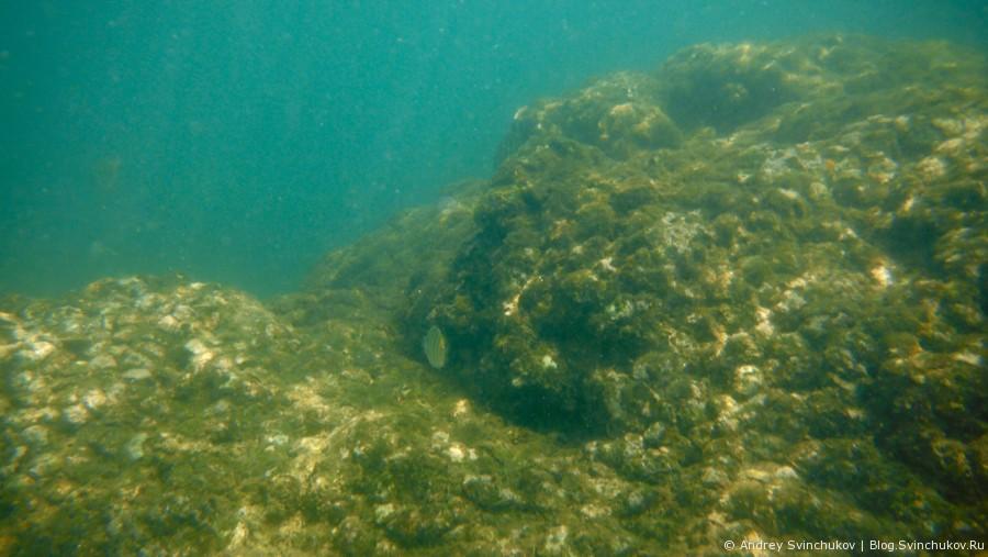 Фотографии с ныряния в Южно-Китайское море