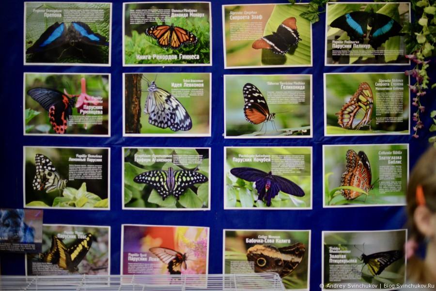 Тропические бабочки и другие обитатели теплых мест