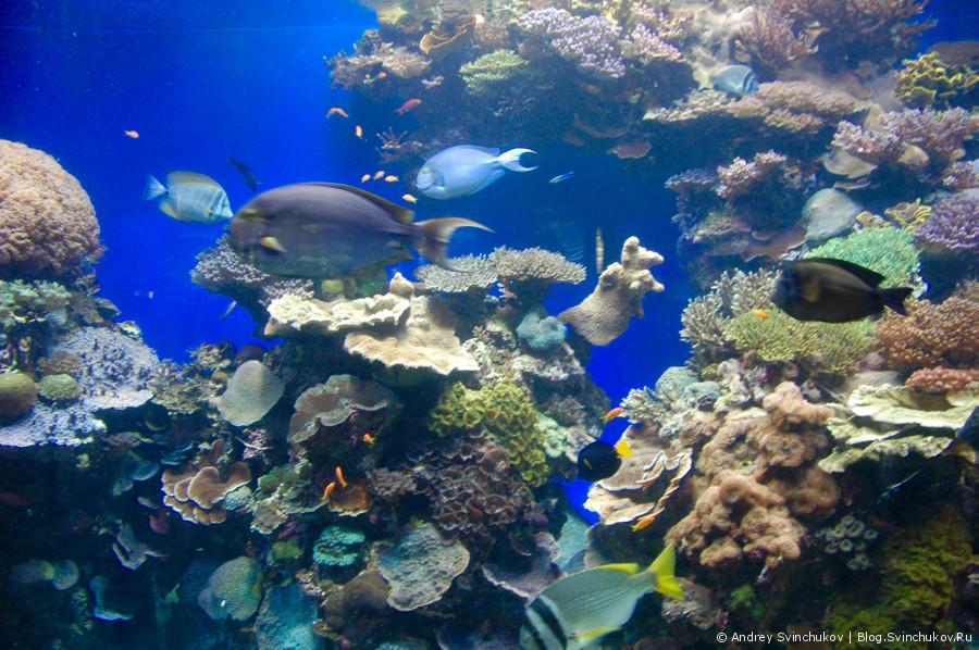 Израиль. Морской парк в Эйлате